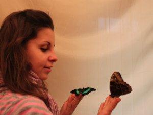 В краеведческом музее поселились бабочки (фото)