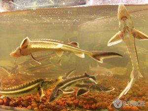 СХК, возможно, подаст в суд в связи с происшествием на Иглаковском рыбохозяйстве