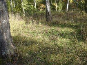 Загадка Чертовой поляны (фото)