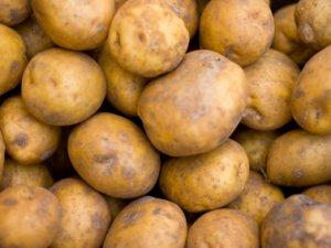 Томичи собрали порядка 150 тонн «социального» картофеля